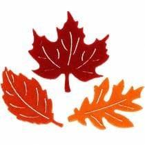 Follaje, hojas y setas