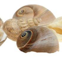 Decoración de conchas