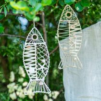 Decoración de peces marítimos con cestería y conchas, percha de decoración con forma de pez naturaleza 38cm