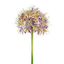 Allium violeta claro L76cm