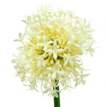 Ornamental Allium Artificial Blanco 51cm 4pcs