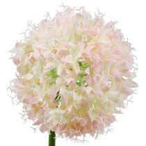 Allium crema rosa Ø15cm L70cm