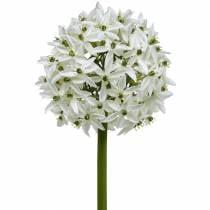 Flor decorativa Allium, puerro bola artificial, cebolla ornamental blanca Ø20cm L72cm
