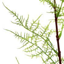 Rama de espárragos 75cm verde 3pcs
