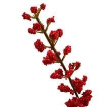 Arbusto Astilbe Rojo 52cm