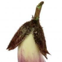 Berenjena 18,5cm violeta