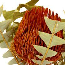 Banksia Baxterii Naranja 8 piezas