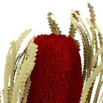 Banksia Hookerana rojo 7pcs