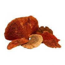 Esponja de árbol naranja 1kg