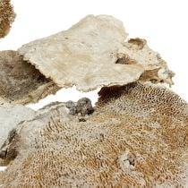 Esponja de árbol lavada blanca 1kg
