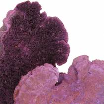 Esponja árbol violeta blanqueada 1kg