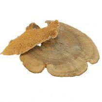 Esponja de árbol natural 1kg