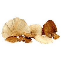 Esponja de árbol blanqueada 1kg