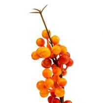Baya rama naranja L 30cm 12pcs