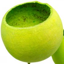 Campana en un palo verde seco exótico 15 piezas