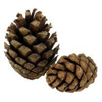 Conos de pino de montaña Conos de pino 2kg