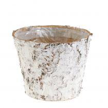 Maceta con abedul blanco Ø15cm H12.5cm