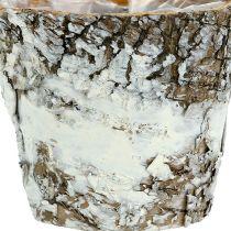 Maceta de abedul mini blanco Ø7cm H7cm