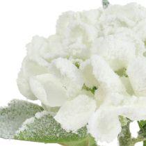 Hortensia Blanca nevada 33cm 4pcs