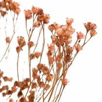 Flores secas Escoba Bloom Brown 170g