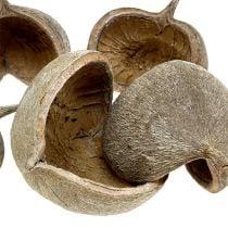 Buddha Nuts 8-10cm blanqueado 10pcs
