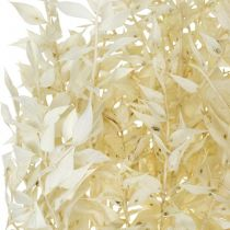 Ruscus ramitas de Ruscus secas blanqueadas, paquete de 4-6 piezas