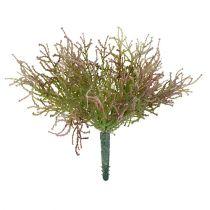Calocephalus Rosa / Verde 21.5cm
