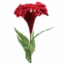 Celosia cristata Hahnenkamm Rojo 72cm