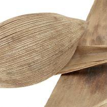 Cáscaras de coco blanqueadas 25pcs