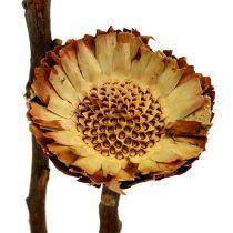 Compacta roseta luminosa 50pcs