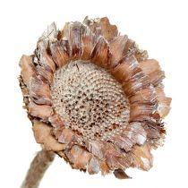 Coronata roseta 25pcs. Blanco lavado