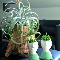 Maceta decorativa raíz gris 33cm x 29cm H30cm