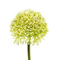 Crema Allium decorativa Ø6.5cm L39cm