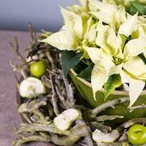 Rama deco arbusto de curry verde lavado 500g