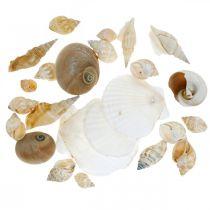 Conchas de caracol decorativas Caracoles de mar naturaleza Decoración marítima 350g