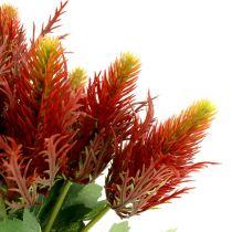 Cardo Rojo-Verde 20cm 12pcs