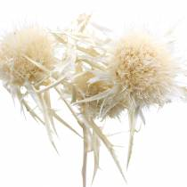 Ramita de cardo flor seca Blanqueada 80g