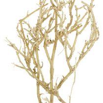 Dry Tree 500g blanqueado