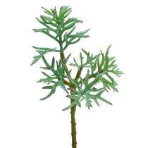 Echeveria 33cm verde claro