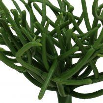 Euphorbia Pick Green 19cm 4pcs