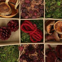 Kit de artesanía de mezcla exótica