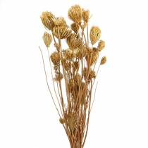 Flores secas de hinojo natural 100g