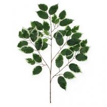 Rama decorativa Rama de Ficus 58cm