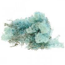 Musgo decorativo musgo de reno aguamarina azul claro musgo artesanal 400g