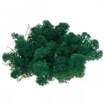 Deko-Mos musgo de reno verde conserva musgo para manualidades 400g
