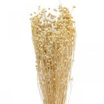 Hierba seca de flora seca blanqueada de lino 100g