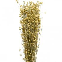 Hierbas naturales de lino para floristería seca 100g