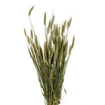Decoración de grano Triticale como Bund Natur 1bund