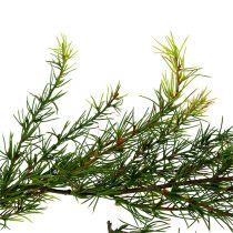 Guirnalda Alerce Verde L 200cm
