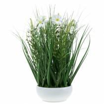 Hierba decorativa con flores de Cosmea en un cuenco H45cm